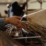 Waar moet je aan denken bij het goed houden van veevoer?